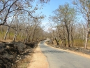 Cycling inside Bandipur Forest