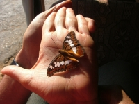 Butterfly on Priya'a Palm